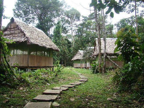 The tambos -- our dwellings -- at Madre Selva