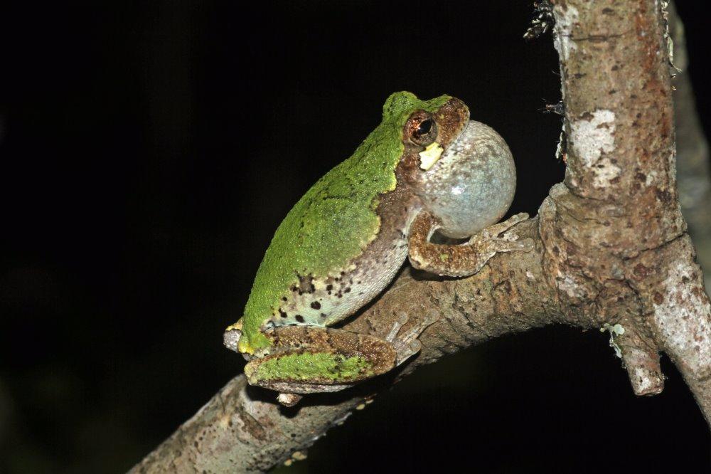 kingsnake com - reptile and amphibian classifieds, breeders