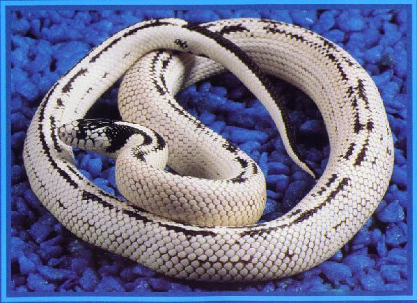 Snake Breeding Tools