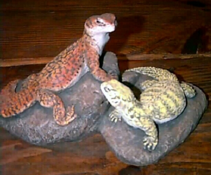 http://www.kingsnake.com/uromastyx/images/AcanScu.jpg