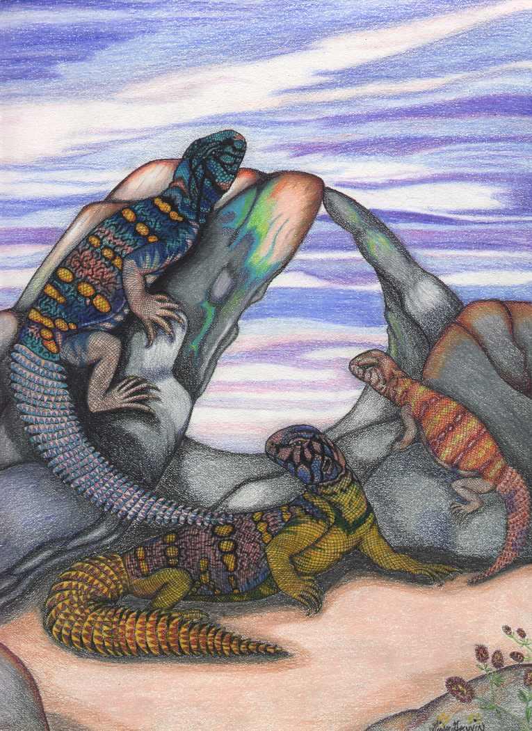 http://www.kingsnake.com/uromastyx/images/Gina.jpg
