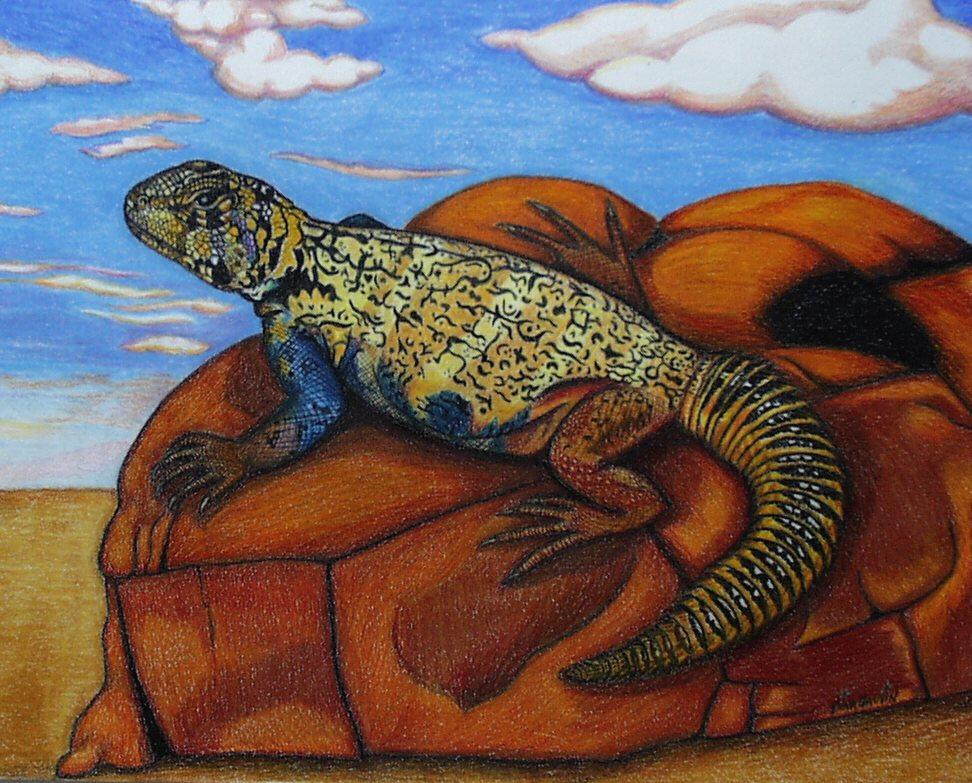 http://www.kingsnake.com/uromastyx/images/Navaho.jpg