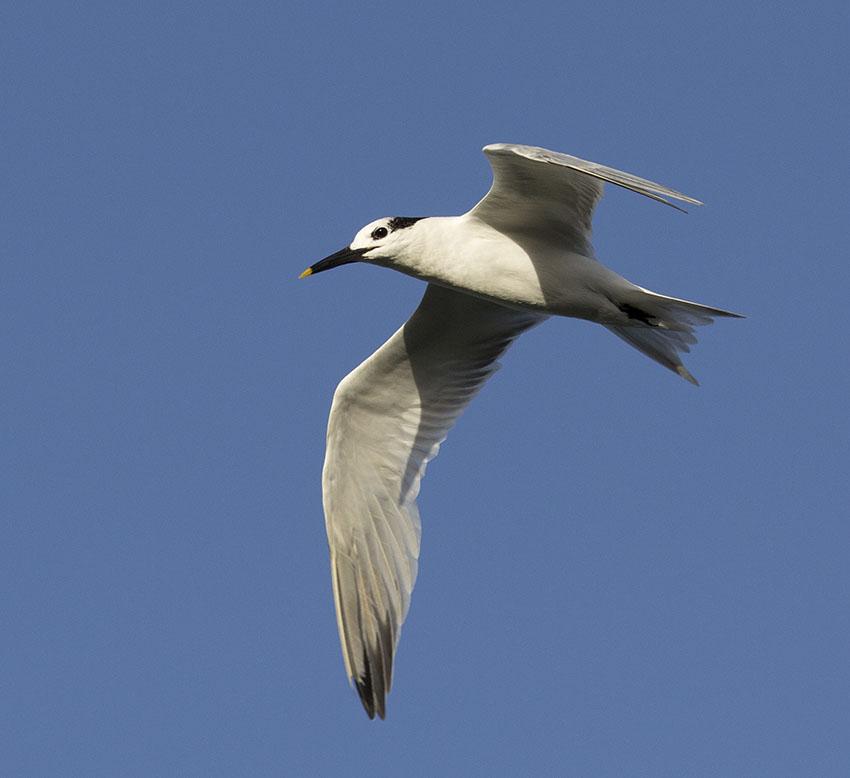 Это фото вы сможете посмотреть в каталоге: птицы карелии фото.